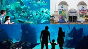 Bournemouth-Oceanarium-Una experiencia única