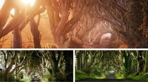 Dark Hedges, no te pierdas esta maravilla de la naturaleza.