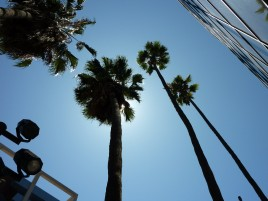 palm-trees-los-angeles-california-curso-inglés-adulto-cidi