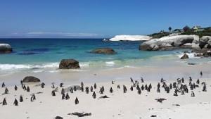 En las numerosas playas de Ciudad del Cabo te esperan numerosas aventuras.